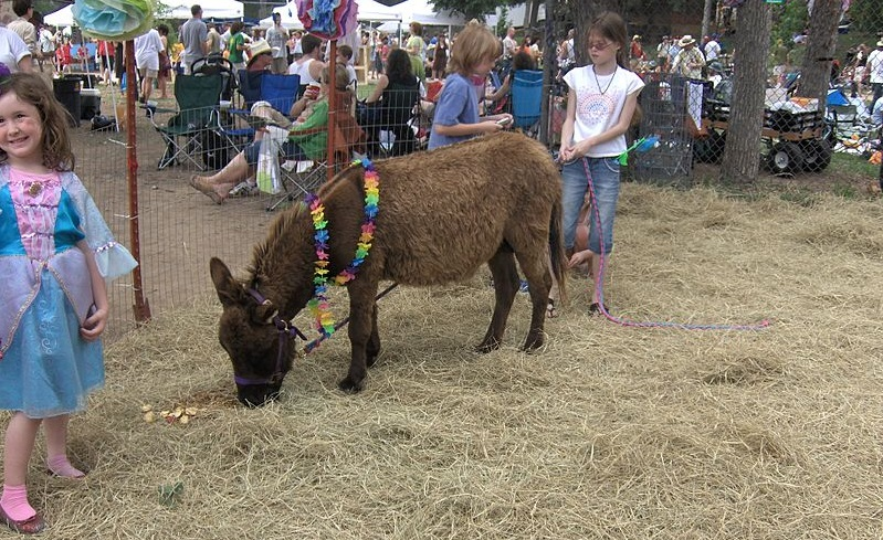A donkey wearing a lei next to a child at Eeyore's birthday.