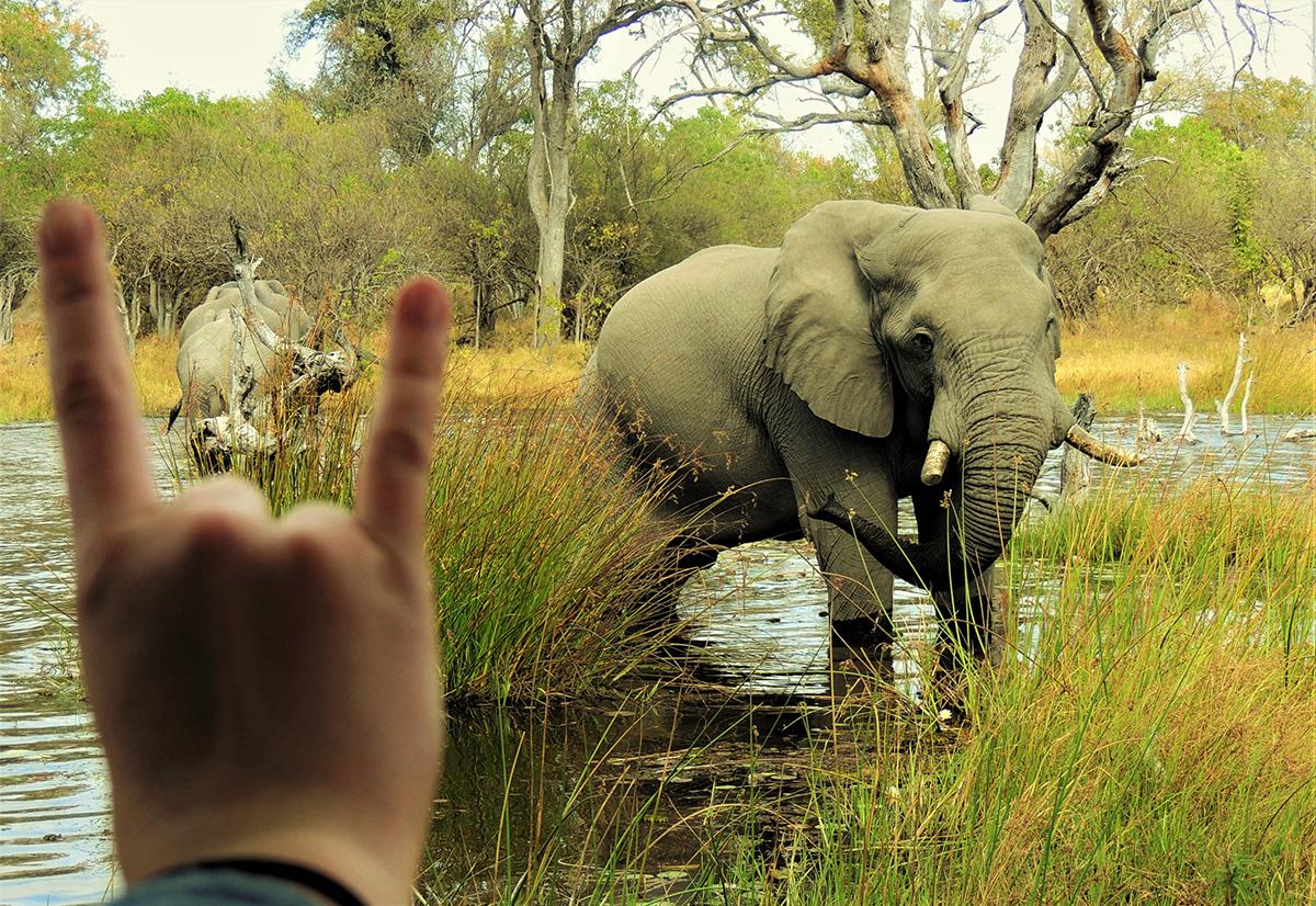 A hook 'em horns sign next to an elephant