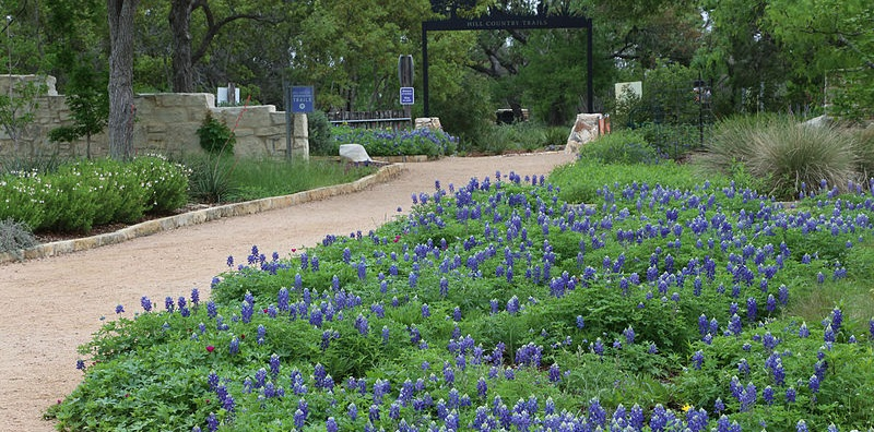 A trail at the Lady Bird Johnson Wildflower Center surrounded by bluebonnets.