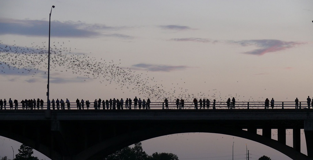 A group watches bats fly out from the Congress Avenue bridge.